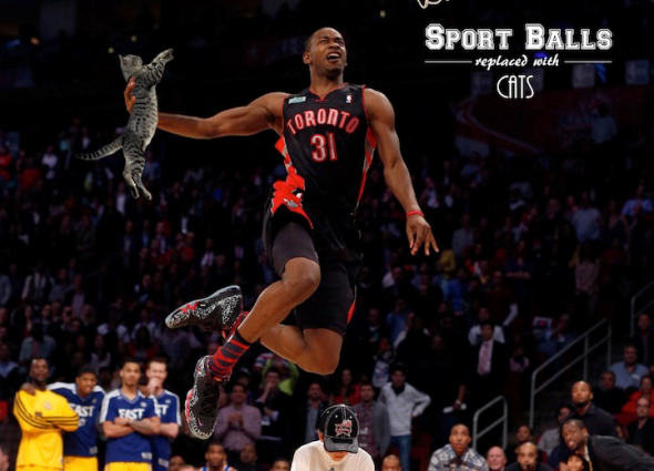 Sports Balls Replaced with Cats 5